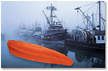 Photo of Salmon Boats in Fog